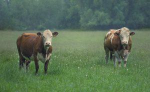 carne e latticini